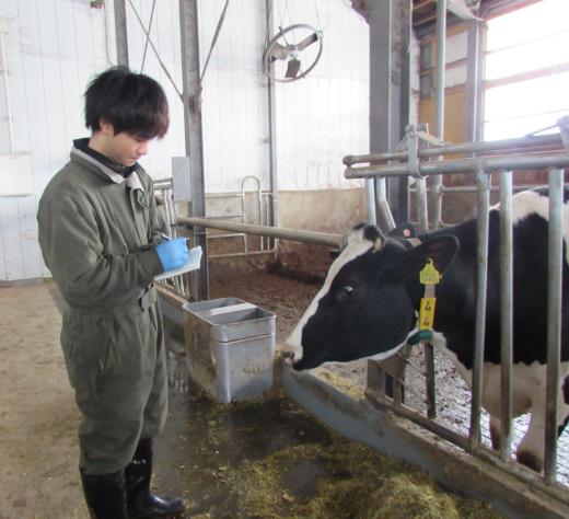 牛の世話をする三原さん