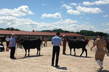 牛の品評会の様子